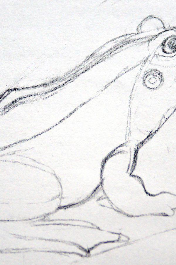 Atelier le gué, Grenouille au trait, Florian H. Munster