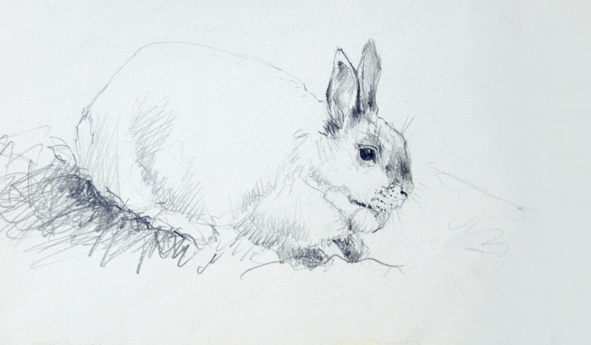 Crayon graphite, esquisse le tendre Lapin, Anne-Marie Bugna