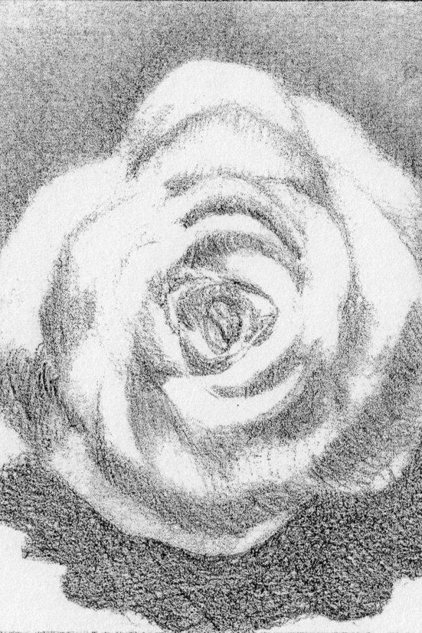 Atelier le gué, Rose plâtre blanc, Sylvain K. Muhlbach sur Munster